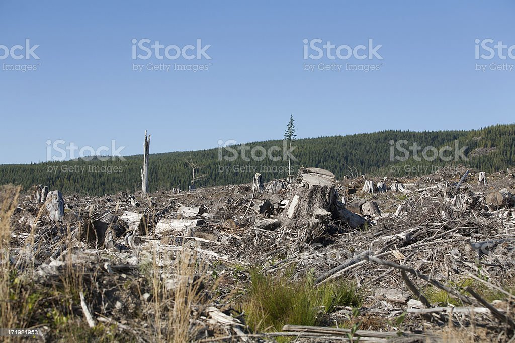 Logged forest royalty-free stock photo