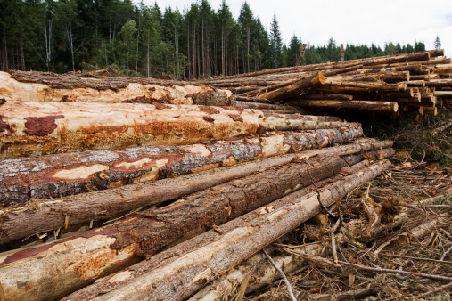 Logged Logs