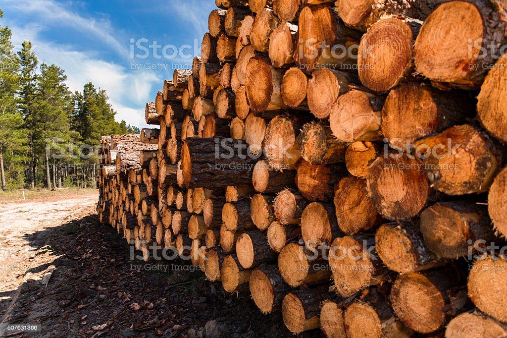 Logged stock photo
