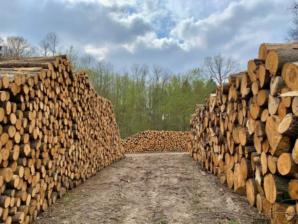 Logged timber off to a different life. stock photo