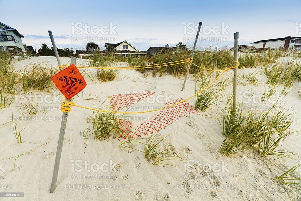 Loggerhead Sea Turtle Nest at Pawleys Island South Carolina stock photo