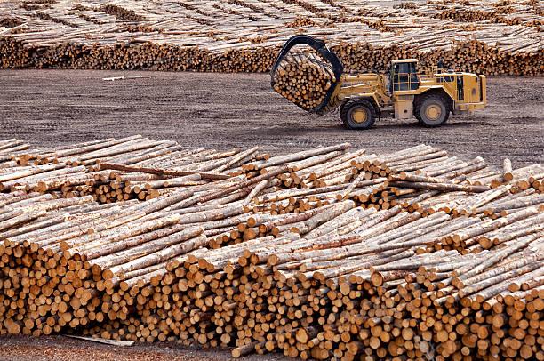 accesso e industria forestale in british columbia - industria forestale foto e immagini stock