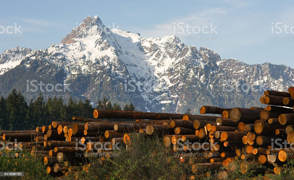 Logging Camp Whithorse Mountain Darrington Washington Stacked Logs stock photo