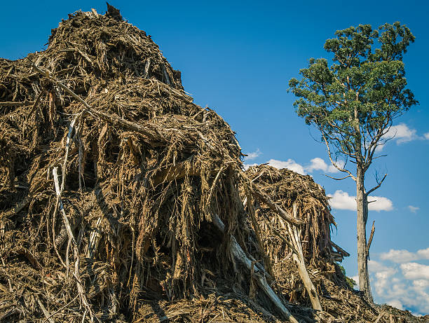 Logging Destructionh stock photo