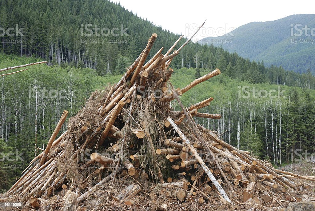 Logging Industry Clean up Pile royalty-free stock photo