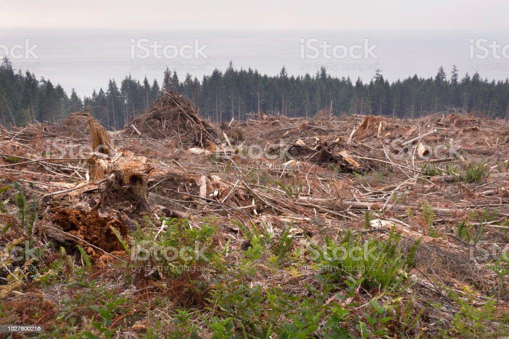Logging industry clear cut deforestation Strait of Juan de Fuca Vancouver Island British Columbia stock photo