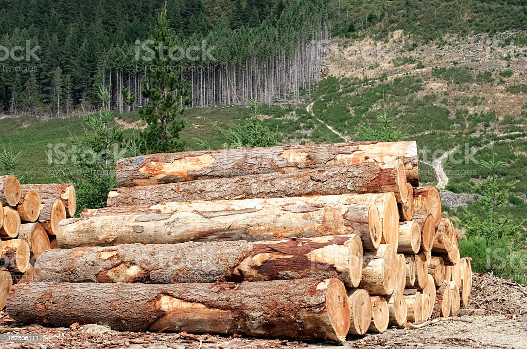 Logging Industry: Forest Felling royalty-free stock photo
