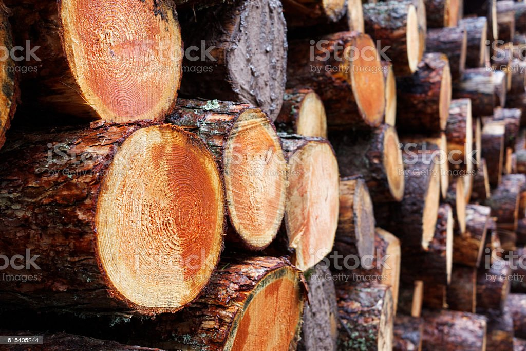 Logging Industry - Pile of Freshly Chopped Tree Trunks stock photo