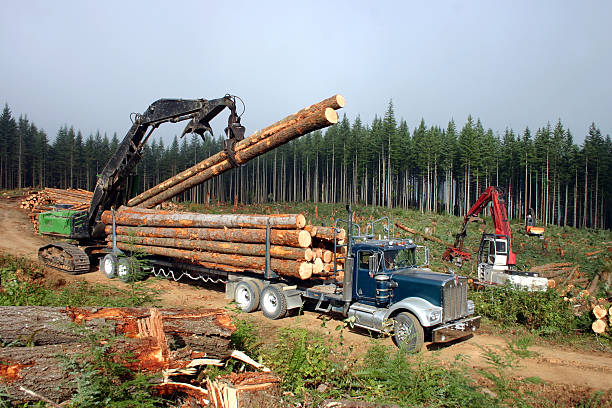 logging machines grabbing logs and putting them on the truck - logging equipment stock photos and pictures