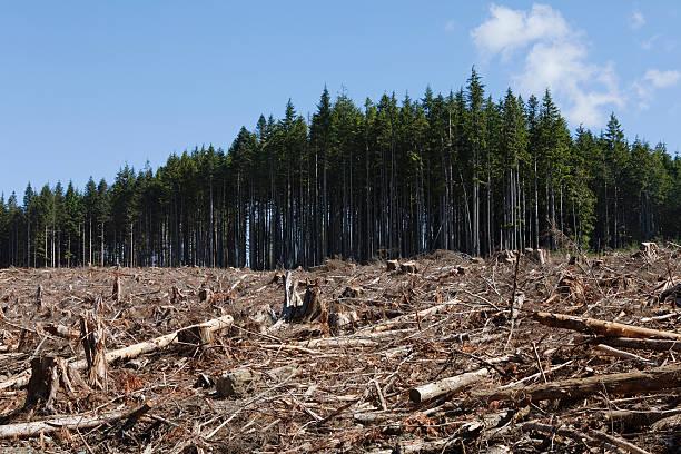 el registro de - deforestacion fotografías e imágenes de stock