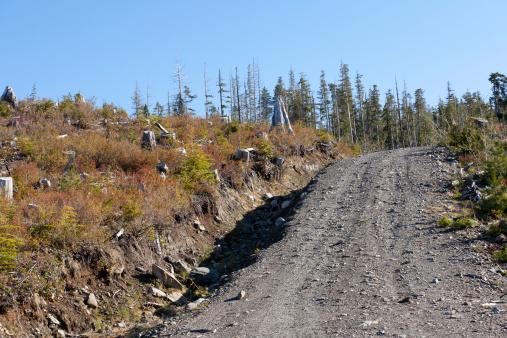 Logging road ditch