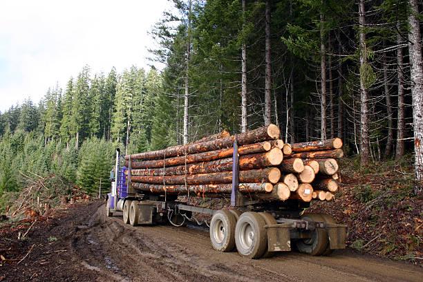 camion di registrazione - industria forestale foto e immagini stock