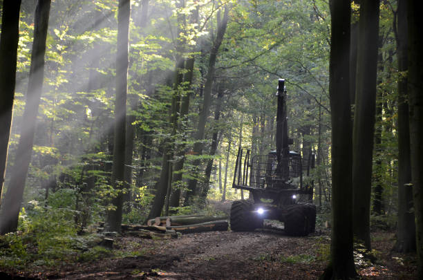 logging work - logging equipment stock photos and pictures