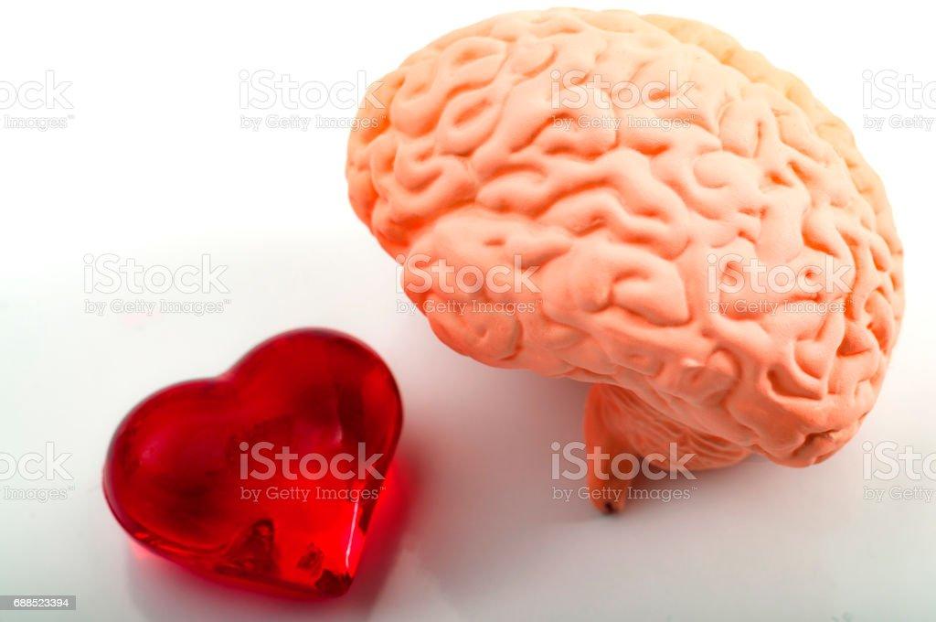 Logic versus emotions or feelings vs mind concept stock photo