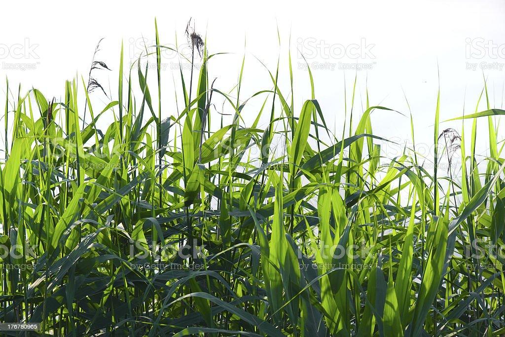 Logn grass stock photo