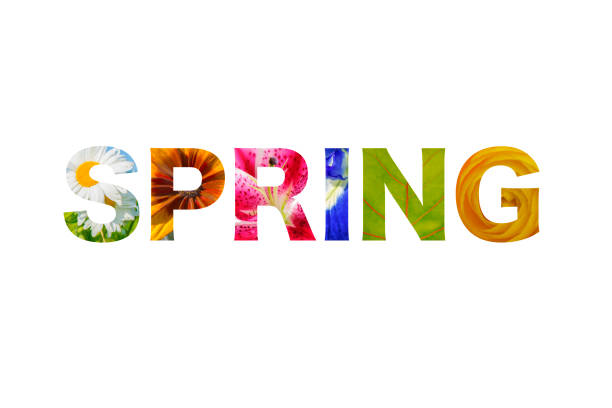 logo lettering spring word - isolated over white - spring stock pictures, royalty-free photos & images