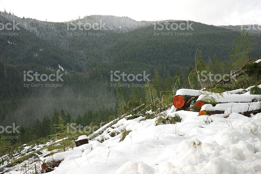 Logs and New Trees - Forestry Canada royalty-free stock photo