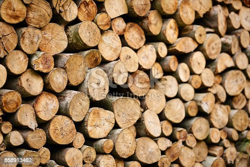 abstract horizontal logs background in nature, no people.