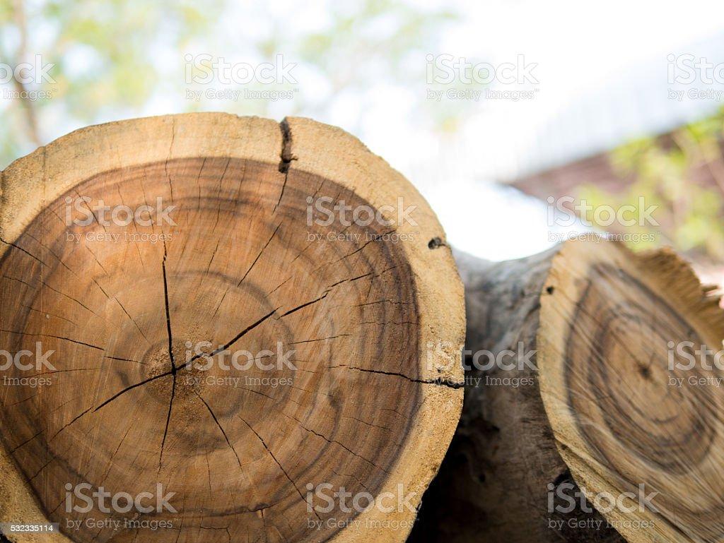 Log's crosscuts stock photo