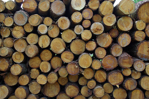 logs cut and stacked stock photo