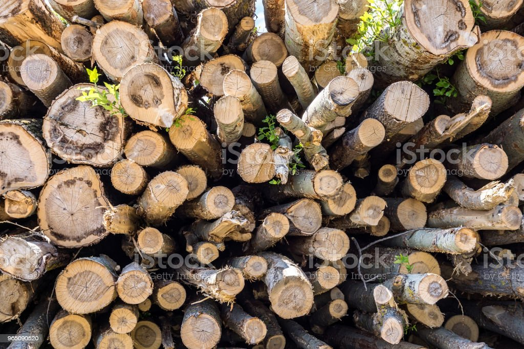 logs for logging royalty-free stock photo