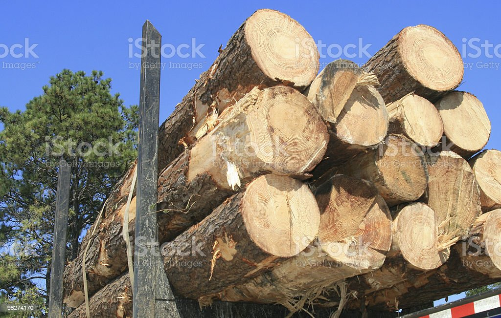 logs for lumber royalty-free stock photo