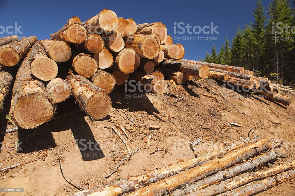 Logs from a logged forest royalty-free stock photo