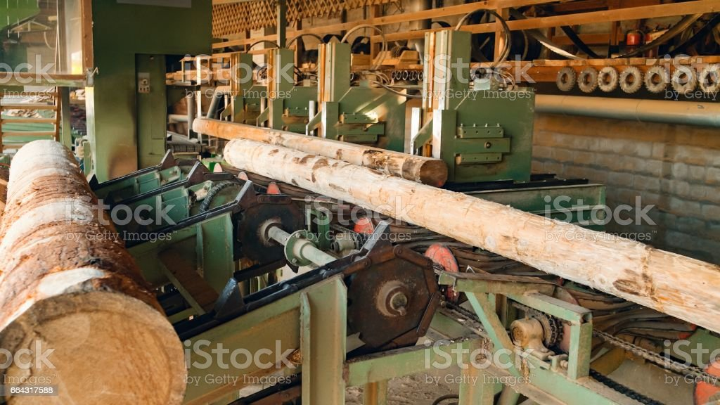 Logs loaded on conveyor belt stock photo