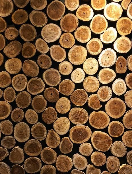 Troncos de madeira - foto de acervo