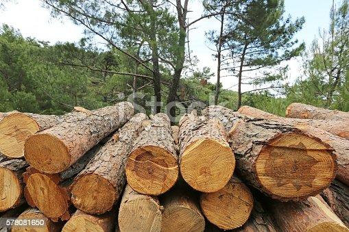 Logs of woods depicting deforestation