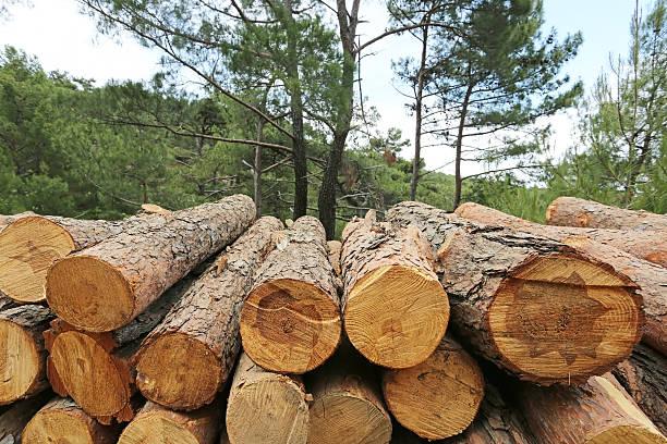Logs of woods depicting deforestation - foto de stock