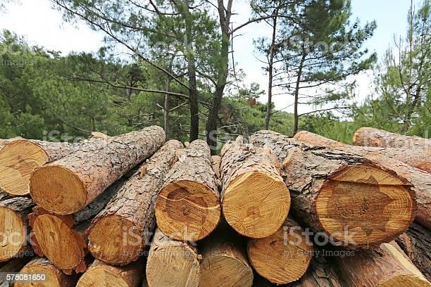 Photo of Logs of woods depicting deforestation