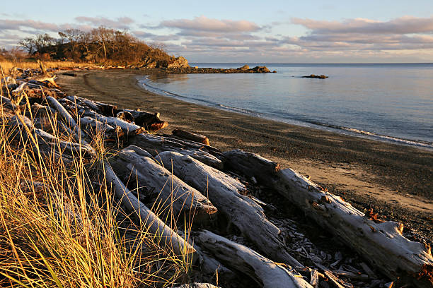 Logs on a West Coast Beach, Nanaimo, British Columbia, Canada stock photo