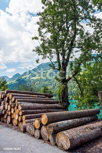 Logs on the edge of Lake Lungern or Lungerersee in Obwalden, Switzerland.