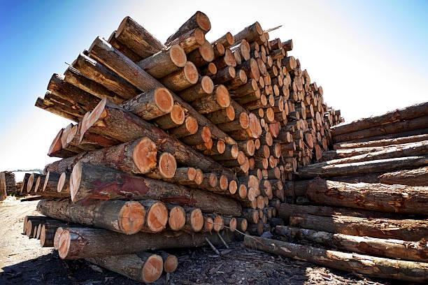 Logs pile. stock photo