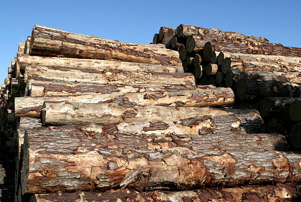 Logs stacked at a shipping terminal, ready for export.