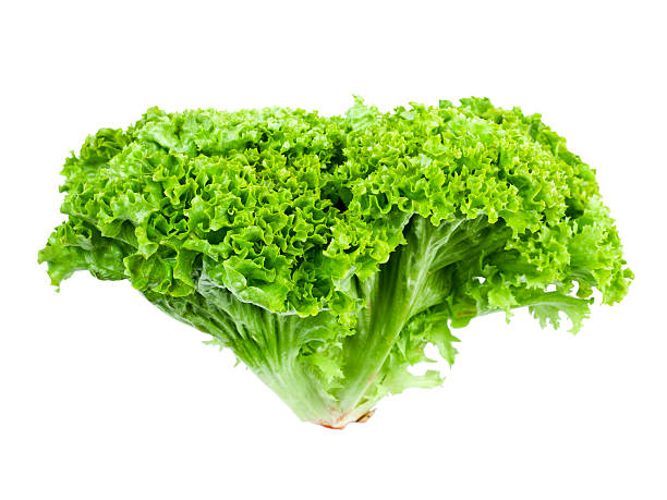 Lollo Bionda Lettuce stock photo