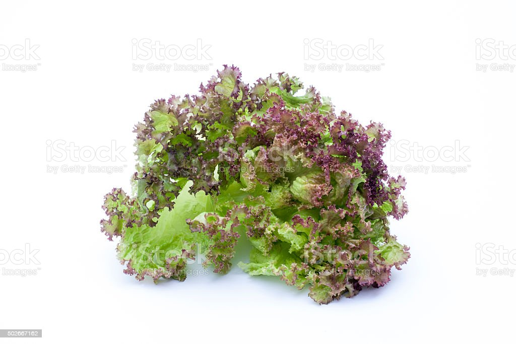Lollo Rossa, lettuce isolated on white background stock photo