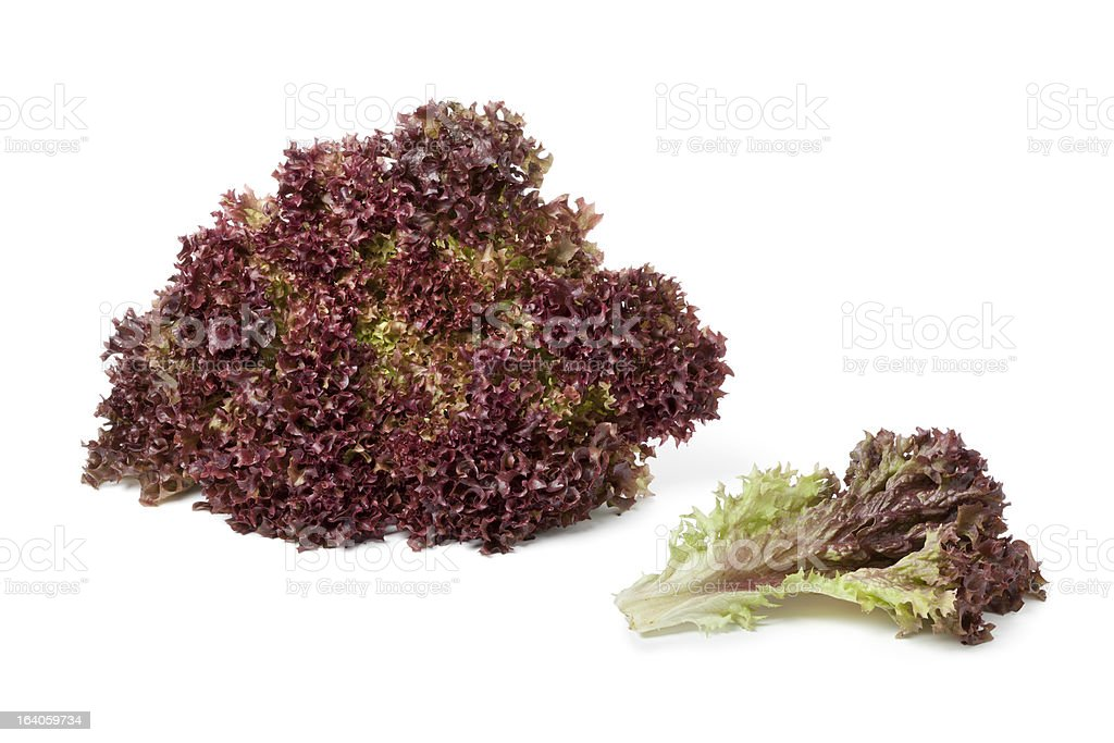 Lollo Rosso lettuce and a leaf stock photo