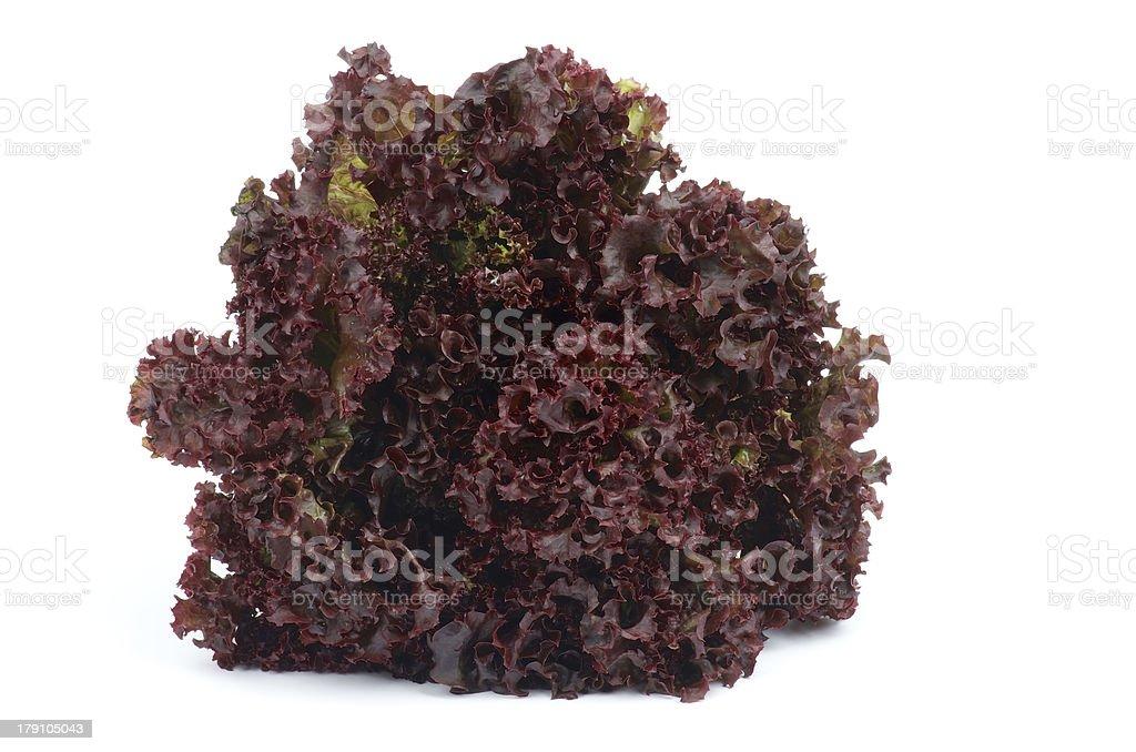 Lollo Rosso Lettuce stock photo