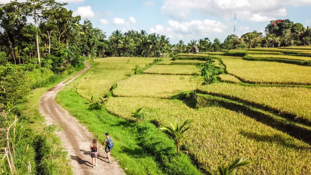 lombok-bovenaanzicht op een rijstveld terras in tetebatu - lombok stockfoto's en -beelden