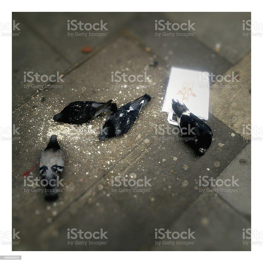 London pigeons stock photo