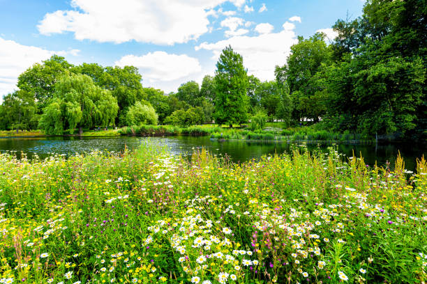 London Saint James Park green foliage and trees in sunny summer with many flowers by pond river water landscape stock photo