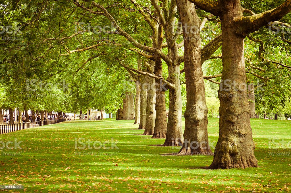 London St. James's park in autumn royalty-free stock photo