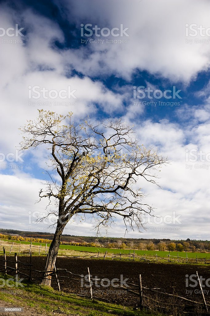Lone Autumn Tree in Field Against Blue Sky royalty-free stock photo