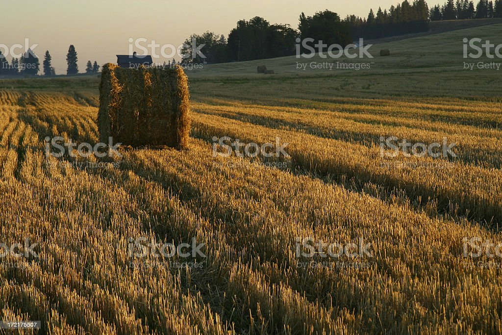 Lone bale royalty-free stock photo