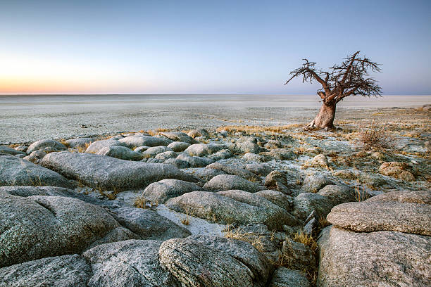 lone baobab tree - angola stock photos and pictures