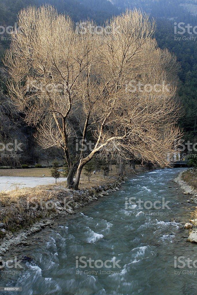 lone bare tree standing by the river royaltyfri bildbanksbilder