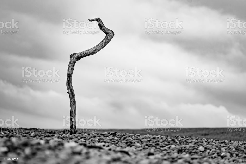 A Lone Branch stock photo