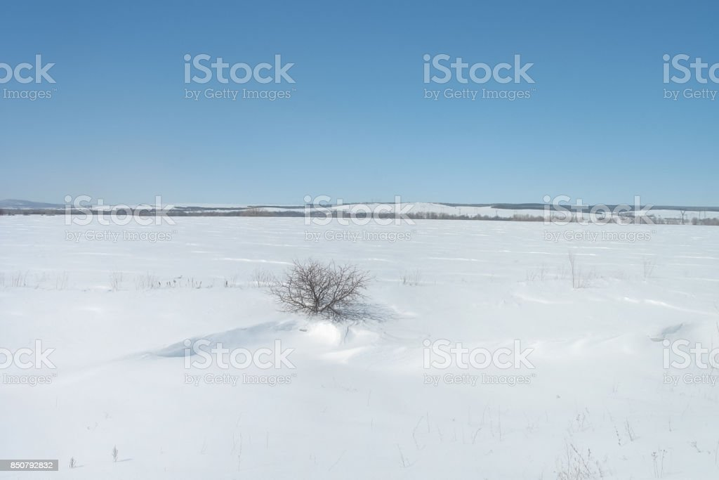lone Bush standing in the middle of a snowy field stock photo